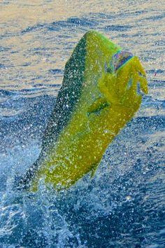 Fishing the East Cape with Mark Rayor Sea Fishing, Sport Fishing, Gone Fishing, Saltwater Fishing, Fishing Reels, Kayak Fishing, Fishing Hole, Fishing Stuff, Fishing Tips