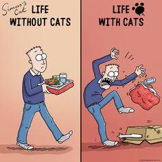 Funny Cute Cats, Cute Funny Animals, Pretty Cats, Beautiful Cats, Crazy Cat Lady, Crazy Cats, Kitten Breeds, Cat Jokes, Pusheen Cat