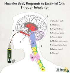 When essential oils are inhaled through the nose, tiny nerves send an immediate signal to the brain and go straight to work on the systems that moderate our minds and bodies. Inhalation can be the most direct delivery method of these incredibly nurturing components in essential oils, since the chemical messengers in the nasal cavity have direct access to the brain.