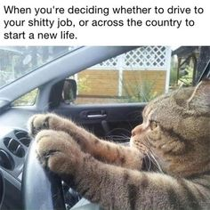 When Your Deciding Whether To Drive To Your Job Or Across The Country To Start A New Life animals cats jokes animal lol funny quotes funny sayings humor funny animals