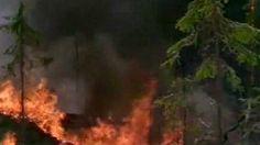 Metsäpalot muuttavat maisemaa | Elinympäristöt | Oppiminen | yle.fi