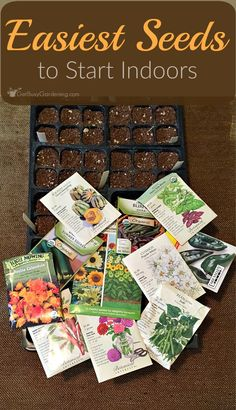 What To Search For Right Before You Purchase Your Higher Than Floor Pool Save Money By Starting Seeds Indoors This Spring. Here's Some Of The Easiest Seeds To Start For Beginner Gardeners Both Flowers And Edibles. Indoor Vegetable Gardening, Organic Gardening Tips, Container Gardening, Flower Gardening, Sustainable Gardening, Gardening Hacks, Starting Seeds Indoors, Hardy Plants, Growing Seeds