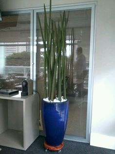 Large Planters, Flower Planters, Planter Pots, Ceramic Planters, Container Plants, Container Gardening, Lanai Decorating, Deco Cactus, Indoor Tropical Plants