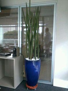 Arranjo Lança + Vaso Azul