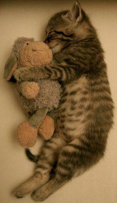 Goodnight moma ...