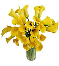 Instead of the green----> Yellow Calla Lily Flowers from Pacific Callas