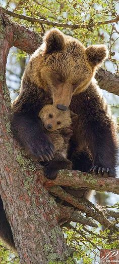 Bear mother with her cub #by Jan Pelcman Jan Pelcman #wildlife wilderness animal nature cute