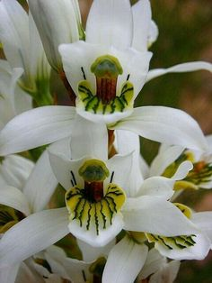 Orquídeas!