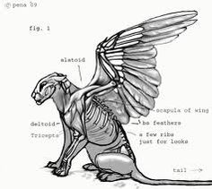 Bird Wings Anatomy Search Ideas For 2019 Lion Anatomy, Dragon Anatomy, Animal Anatomy, Anatomy Art, Creature Concept Art, Creature Design, Doodles Zentangles, Fantasy Creatures, Mythical Creatures