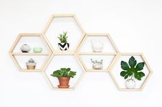Love the hexagon shelves. I want to make these out of thin wood to just display little trinkets