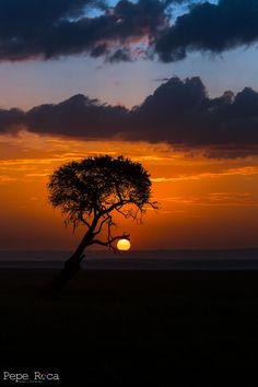 ~~Sunset at Masai Mara   Kenya by Pepe Roca~~