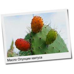 Масло Опунции кактуса, 1 литр