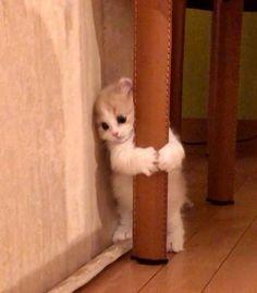 Cute Baby Cats, Cute Kittens, Cute Little Animals, Cute Funny Animals, Cats And Kittens, Funny Cats, Memes Chats, Cat Memes, Cute Cat Wallpaper