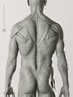 """Male Anatomy figure: v.2   - professional artist model   1:6 life-size, yet incredibly detailed, this desktop model shows ideal proportions & superficial muscles of the male human body. Shows the rarely displayed platysma muscle & fascia of the body & surface vascular system. Matches the male skeleton & proportional figure. Realistic eyes. Aprox. 11.75""""H x 2""""D x 3.5""""W"""