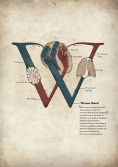 William Harvey, an English physician was the first to describe accurately how blood was pumped around the body by the heart. The poster integrates William harvey's initial and blood circulation diagram through the heart, lungs and capillaries. Graphic Design Posters, Graphic Design Typography, Typography Inspiration, Design Inspiration, Book Design, Design Art, William Harvey, Hospital Design, Medical Art