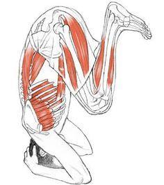 Acunchanasana Asana, Yoga Bridge Pose, Ayurveda, Stretches Before Workout, Yoga Muscles, True Yoga, Shiatsu, Vie Motivation, Relaxing Yoga