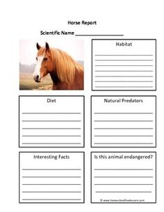 This is a fill in the blank Horse worksheet.  These animal report worksheets encourage the student to research the animal's scientific name, habitat, diet, predators, endangered status and more.  This worksheet fits into STEM curriculum for grades Kindergarten, First Grade and Second Grade.