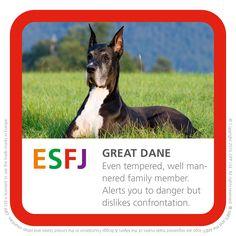 ESFJ - great Dane