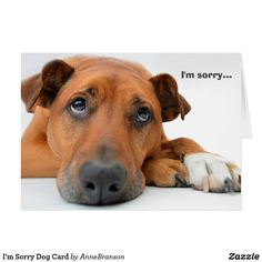 Shop I'm Sorry Dog Card created by AnneBranson. Im Sorry, Doggy Stuff, Dog Cards, Photo Reference, Custom Greeting Cards, Thoughtful Gifts, Paper Texture, Smudging, Puppies