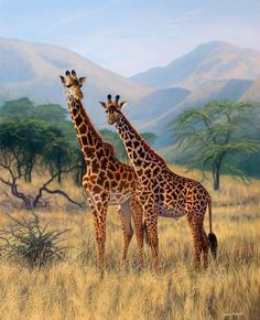 Daphne Butler…giraffe mother and calf Giraffe Pictures, Animal Pictures, Wildlife Paintings, Animal Paintings, Africa Safari Lodge, Animals Beautiful, Cute Animals, Afrique Art, Giraffe Art