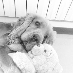 Dog&Bear