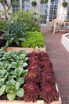 next year's winter garden idea for planters