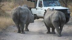 Nyati Safari gir reisende til Sør-Afrika en virkelig førsteklasses safariopplevelse. Noe som gjør opplevelsen enda større er at Nyati har sørget for at hver natt er like magisk som dagen i feltet http://nyati-safari.no