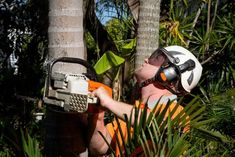 Palm Tree Trimming, Tree Lopping, Leaf Blower, A Team, Palm Trees, Outdoor Power Equipment, How To Remove, Brisbane, Lakes