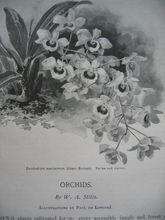 c1894 Paul de Longpre Orchid Illustrations Hummingbirds 15 pages Scribner's Print