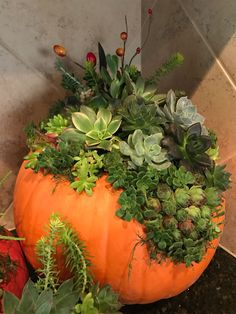 succulents planted on pumpkin