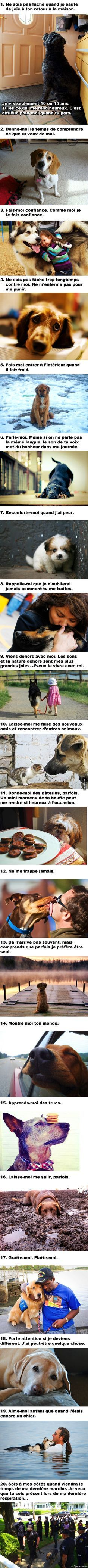 20 choses que tous les propriétaires de chien devraient savoir. If you speak french like me you probably well know what there talking about.