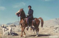 Kurdish horse and Tazy hound. With a high about 150 cm or lower), this is a strong and resistant horse ideal for mountainous roads. This horse is an ancient breed with a long history in Iran. There are three strains of this breed: Jaff, Afshari and Sanjabi. More in https://betterkurdistan.wordpress.com/2013/03/31/kurdish-horse/