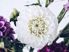 Guten Morgen  . Vermutlich die letzten Dahlien vom Selbstpflück-Feld... Einen schönen Freitag für euch! . Picked some fresh Dahlias... Guess I will try to arrange them in a huge bouquet... . #gutenmorgen #goodmorning #bonjour #morningslikethese #slowmorning #slowdown #slowliving #itsthelittlethings #tv_living #flowerpowerbloggers #faffingfridaycompetition #fouriadorefriday #mood #moody #dahlia #dahlien #flowers #flower #flowermagic #flowerslovers #flowerstagram #instaflowers…