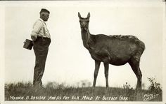 Postcard 5158: Carsell, Warden D. Davison and his pet elk Maud at Buffalo Park (1920])