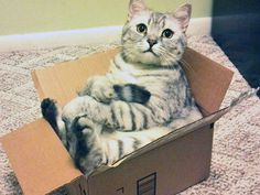 What do you mean I'm too big? I mean You, YOU'RE too big!- Cats In Boxes - Funny Cat Photos - Good Housekeeping