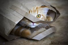 """It's easier to let the cat out of the bag then to put it back in again."" --Mark Twain"