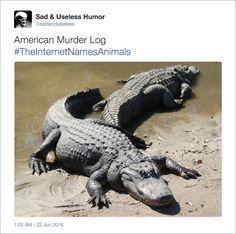American Murder Log - Internet Hilariously Renames Animals Using #TheInternetNamesAnimals