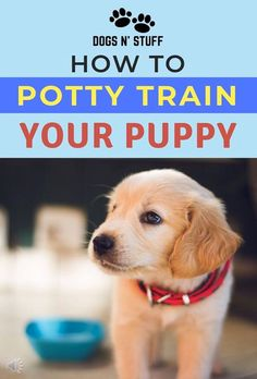 9 Successful Steps on How to Potty Train a Puppy Fast! – Dogs N' Stuff Here are 9 successful steps on how to potty train your new puppy you can start working on TODAY! Puppy Training Tips, Potty Training, Training Your Dog, Training Classes, Training Collar, Training Pads, Toilet Training, Crate Training Puppies, Leash Training