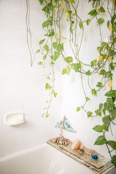 Little Nicki's Plantastic Picks: 4 plants for the bathroom.