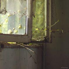 on the windowsill