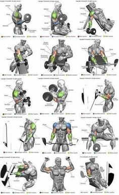 Bicep exercises #musclebuildingworkouts