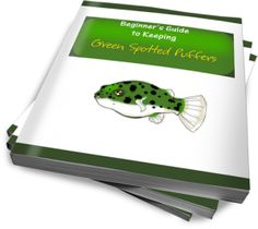 Beginner's Guide to Keeping Green Spotted Puffers
