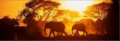 Luxury Safari Holidays from Carrier. Carrier has 30 years' experience in luxury tailor-made safaris in South Africa, Kenya, & more. Oh The Places You'll Go, Places To Travel, Travel Destinations, Places To Visit, Travel Tips, African Elephant, African Safari, Silhouettes, Livingstone
