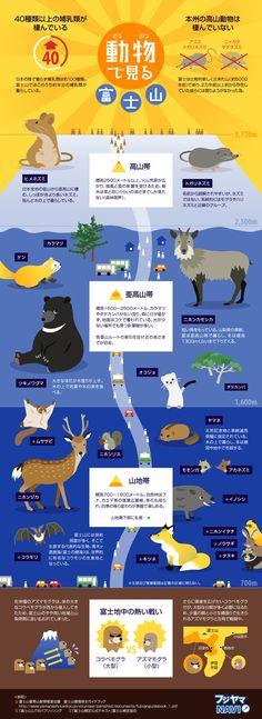 富士山に生息する動物を、標高別にまとめたインフォグラフィックです。各標高の環境や、地中のモグラの生息範囲の争いなど、動物に関する豆知識も...