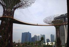 vertical garden from Singapore