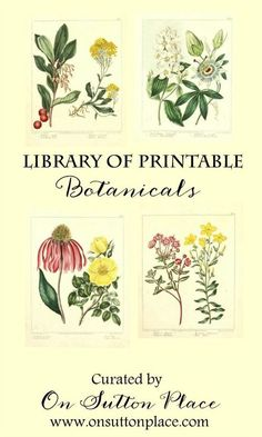 Library of Free Printable Botanicals Stretch your decorating budget by using this library of free printable botanicals to make your own DIY wall art! is part of Free printable art - Metal Tree Wall Art, Diy Wall Art, Diy Wall Decor, Art Decor, Botanical Illustration, Botanical Prints, Botanical Wall Art, Botanical Drawings, Decoupage