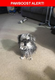 Please spread the word! Phoebe was last seen in Jacksonville, NC 28546.    Nearest Address: Near Mercer Rd & Long Acre Dr