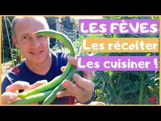🐞 Les fèves, bien les récolter, bien les cuisiner ! - YouTube Green Beans, Vegetables, Cooking Food, Everything, Food, Recipes, Vegetable Recipes, Veggies
