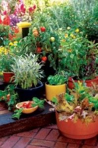 Patio with vegetable container garden