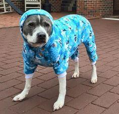 Hund Pyjama Pyjama digitale von Christysdigitalfiles auf Etsy